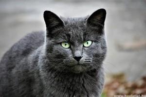 Macskabetegségek: gyomorrontás esetén mit tehetünk?
