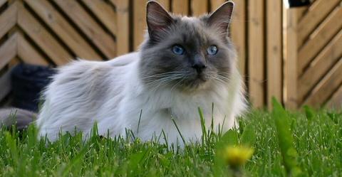 A világ legszexisebb, legügyesebb, legkeményebb cicái