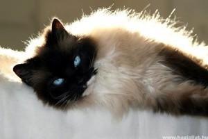 Szexis, kemény, ügyes... az állatvilág különleges cicái