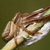 Pók és kecske: 2007. december nyertes háziállat.hu-s fotói