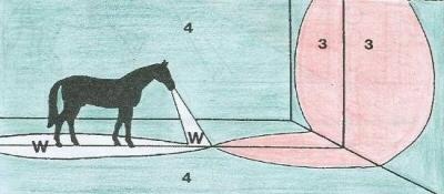 ló, szem, látás