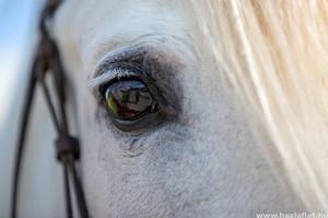 Hogyan látnak a lovak?