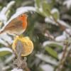 Életmentő madáretetés