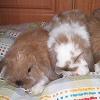 Nyuszisor: 2008. január nyertes háziállat.hu-s fotója