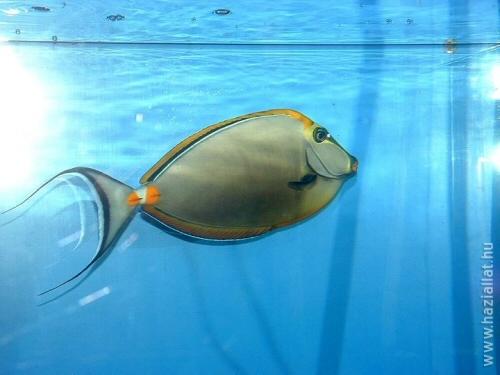 2008. februárban halas kép lett a háziállat.hu nyertes fotója