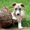 Adó 1%: milyen állatos szervezetnek ajánlhatom fel?