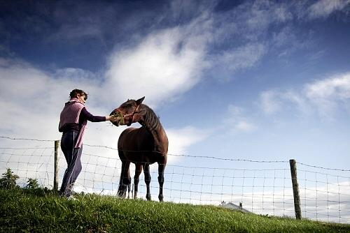hogyan-jutalamazd-a-lovat