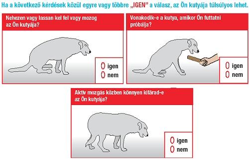 Duci a kutyám?