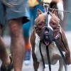 Miért támad az emberre a kutya?