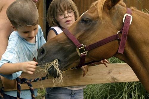 ló, takarmány, széna