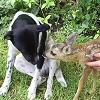 2008. márciusában kutyás és őzgidás kép lett a háziállat.hu nyertes fotója
