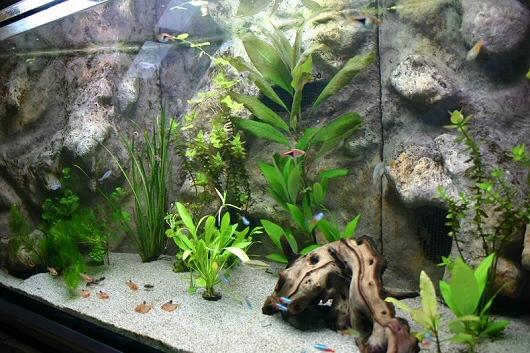 Trapéz alakú sarokakvárium