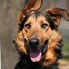 Egyszer volt Budán kutyavásár - Örökbefogadó Nap