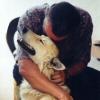 Gyabronka József közel került a kutyákhoz