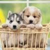 Útmutató az újdonsült kutyagazdiknak