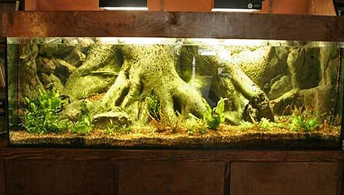 Az akváriumi hátterekről
