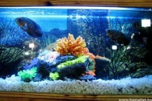 Milyen akváriumi hátteret válasszunk?