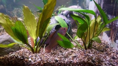 aquarium-fish-242413_1280