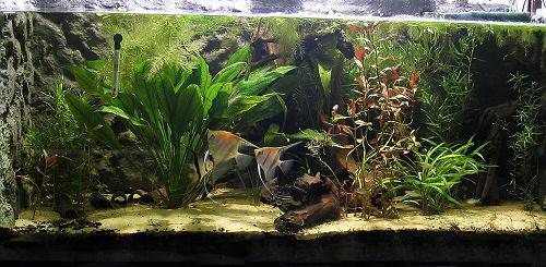 Jó a víz az akváriumban? Ellenőrzési útmutató