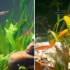 Az akvárium vízparamétereinek változtatása