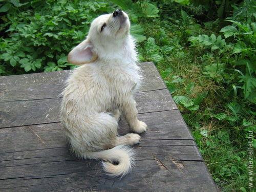 2008. április hónap nyertes fotója: Fanni kutyus