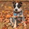 Minden kezdő kutyatartónak jól jönne a kutyaóvoda
