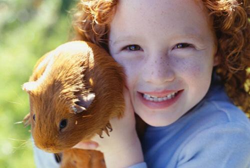 Tengerimalac kisokos: test, látás, hallás, szaglás, szükséglet