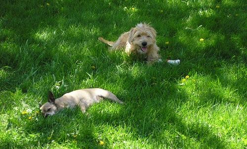 hoguta-kutyaknal