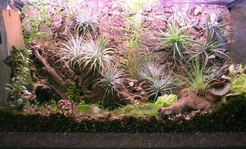 szavanna, terrárium, növény