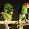Halálos ellenségek a madárkertben