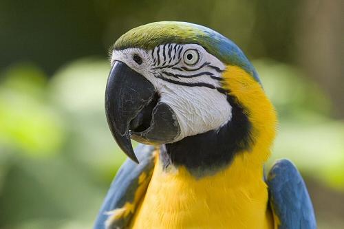 madár, vásárlás, környezet