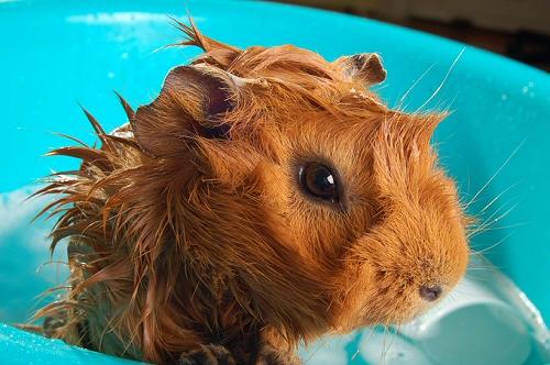 tengerimalac, büdös, fürdetés