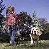 Bélférgek - minden harmadik kutya fertőzött!