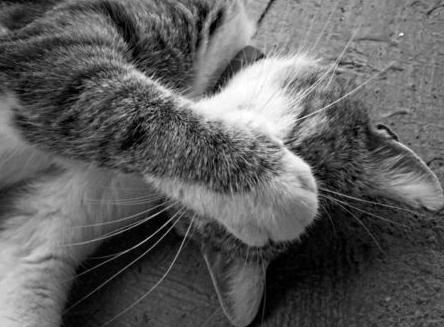 Mit kell tudnunk a macska veszettségéről és álveszettségéről?