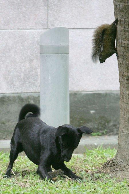 Mire képes egy anya a kicsinyéért? A mókus élet-halál harca - fotóval