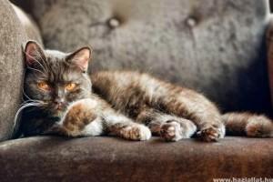 Macskaszőr a kanapén? Hogyan távolítsd el?