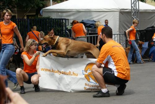 kutya, életmód, kutyaiskola