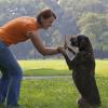 Problémás a kutyád? A tükör módszer segíthet!