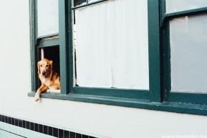 Stresszes kutya: ismerd fel időben, ha valami nem stimmel!