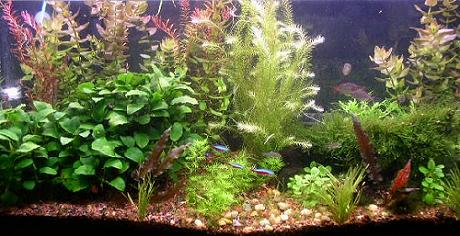 Hogyan adj levegőt a halaidnak? Szellőztetési tudnivalók az akváriumban