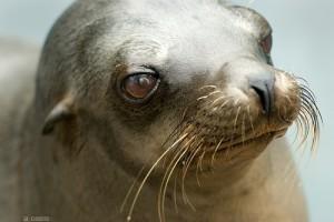 Melyik állat pusztul ki legközelebb? Itt a rettegett Vörös Lista!
