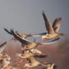 Vadludak százai tértek vissza a tatai Öreg tóhoz