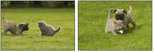 cica-es-kutya-jatszik