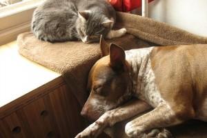 Felelős állattartás mikrochippel