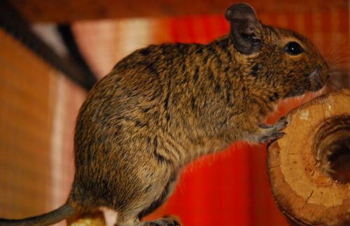 A belevaló kiscsaj szája felszakadt a bunyóban: folytatódnak a degus történetek