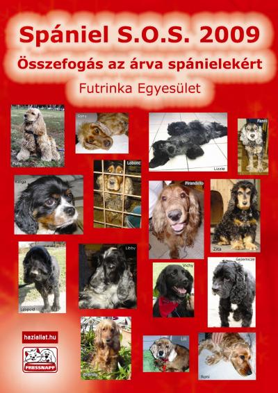 Rendelhető a 2009-es Spániel Naptár: támogasd az árva spánieleket!