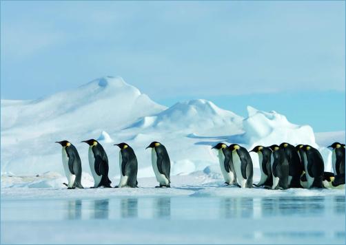 pingvin-elohelye
