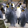 Eltáncol a pingvin az Antarktiszról, ha nem lesz a Földön jégsapka?