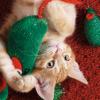 Ördög bújt bele? A macska visszavág az ünnepi díszeknek