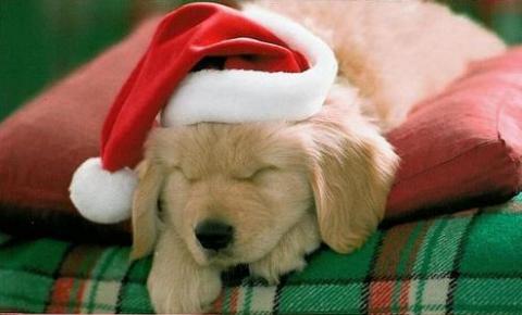 Mi történik, ha karácsonyra állatot ajándékozol?